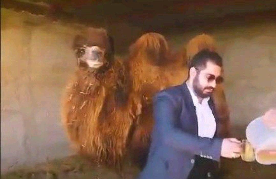 فرد حاشیه ساز درباره «ادرار شتر» بازداشت شد