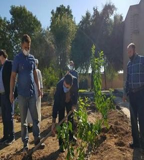 کاشت نهال با کمک خیرین در دانشگاه پیام نور مرکز دزفول