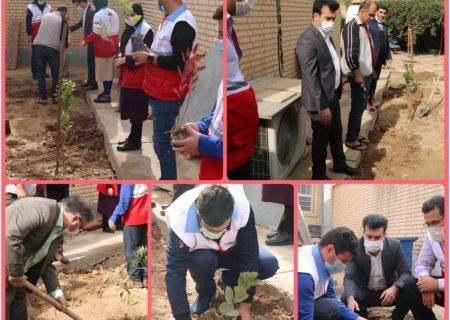 درختکاری با شعار هوای پاک در دانشگاه پیام نور اندیمشک